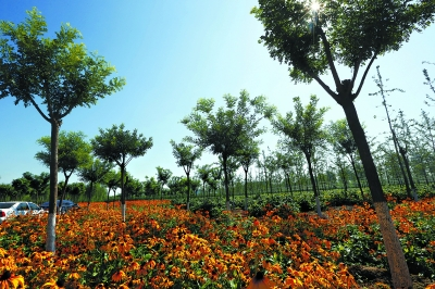 改造后的西集镇树林,充分利用了林下空间种植林花
