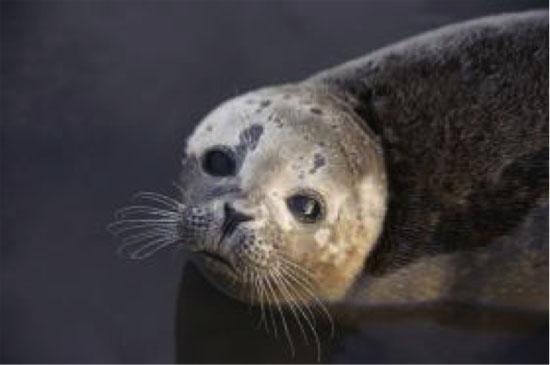 研究:海上风电场或损害海洋动物听力-中国环保网