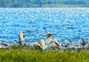 北京市河湖增30种动植物