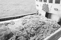 山东渔业公司横跨四省海域非法捕捞