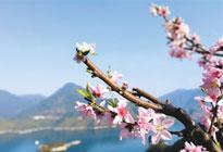 千峡湖景区桃花盛开