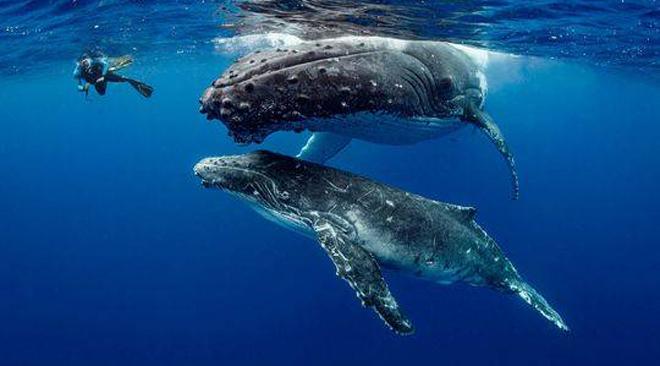 壁纸 动物 海洋动物 鲸鱼 桌面 660_366