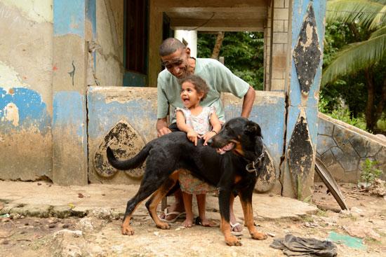 世界动物保护协会:科学管理是解决流浪犬问题最有效的
