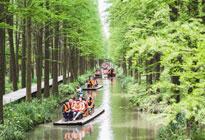 江苏兴化 水上森林