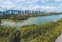 深圳:在同心共建中让绿城变花城