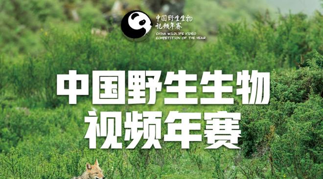 中国野生生物视频年赛