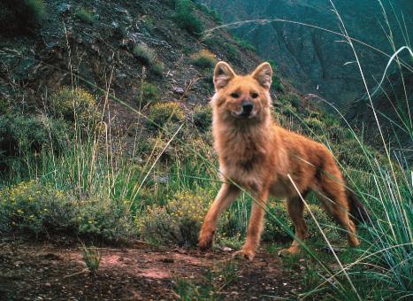 新版《国家重点保护野生动物名录》发布
