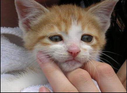 动物:表情痛苦表情包时女人图片的插搞笑哀乐檄组图易于颜表(9)图片