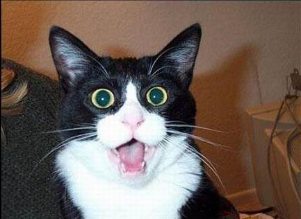 动物:表情乌拉亚表情包搞笑哀乐檄组图易于颜表(7)图片