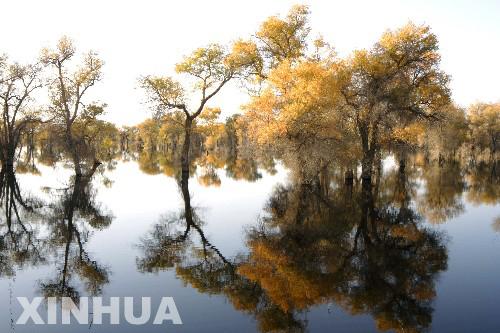 新疆塔里木胡杨林充满生机