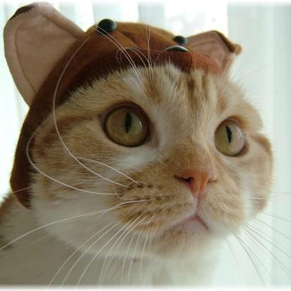 超可爱的小猫猫