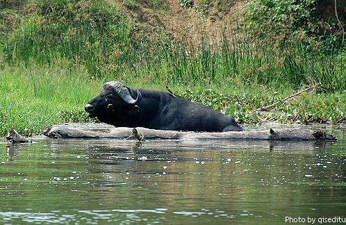 组图:尼罗河上游的狂野动物世界