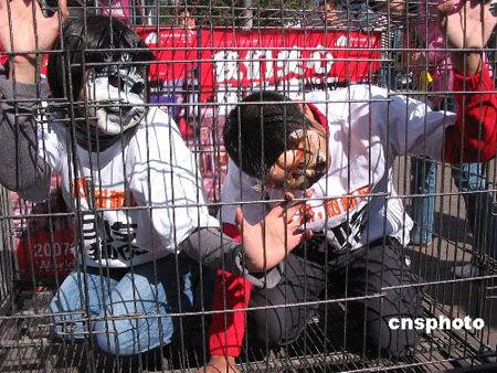环保 大学生/一男一女两名大学生分别戴上猫和狗的面具在笼中表演