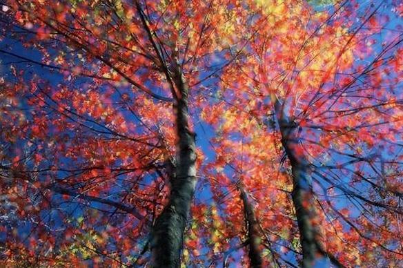 树木最美丽的季节