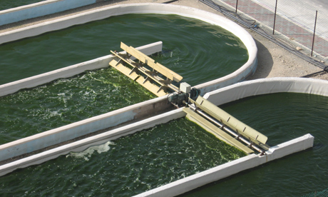 英国启动世界最大的藻类生物燃料项目