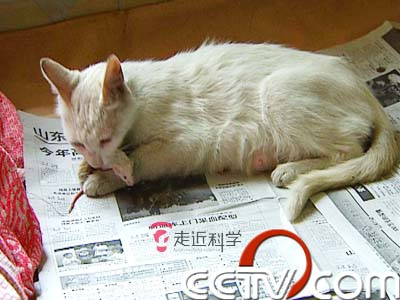天敌的异变:母猫给幼鼠喂奶 老鼠爱上猫? (4)