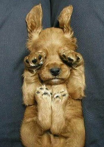 动物疯狂笑死人(组图) - 渴望美好 - 渴望美好的百科精品博客(免费学习娱乐)