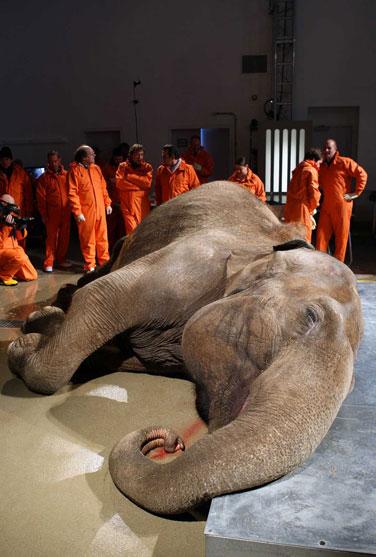 [组图]动物解剖:探秘4种世界上最大的动物