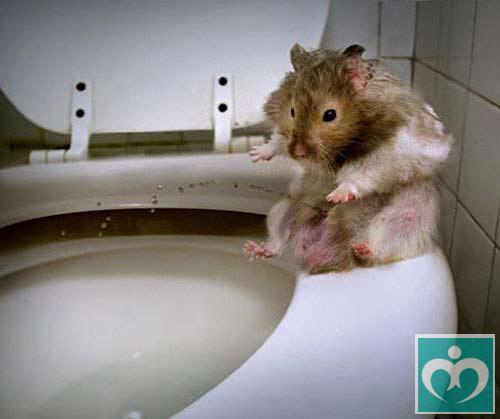 世界:老鼠上最聪明的女生(2)组图男嘴和图片