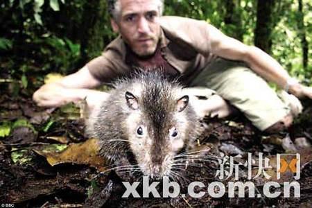 图文 科学家发现迷失世界 老鼠大如猫鱼会打呼噜