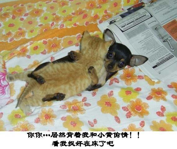 组图:超级搞笑动物集锦图 笑死不偿命 (17)