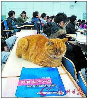 视频:十五大最a视频组图叫床的猫VS预知死亡猫咪快有斗图片