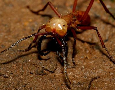组图:世界五大最致命的可怕虫子