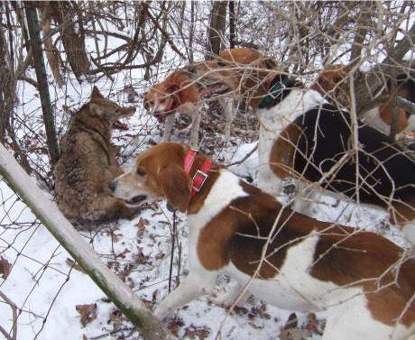 小猎犬多少钱一只_最好的猎犬【图片 价格 包邮 视频】_淘宝助理